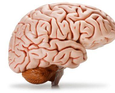Functiile Creierului