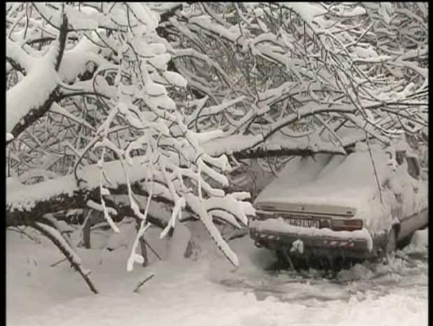 Copaci doborati de ninsoare