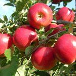 7 motive să plantezi pomi
