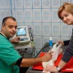 Importanța consultului la veterinar