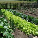 De ce sa utilizati fertilizanti si azotat de calciu